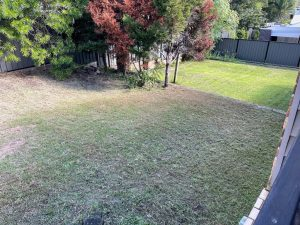 Lawn Mowing After Photo
