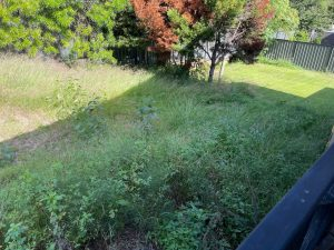 Lawn Mowing Before photo